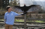 A man and his bird...that is a turkey vulture